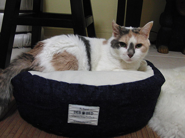 eco-friendly-cat-bed3