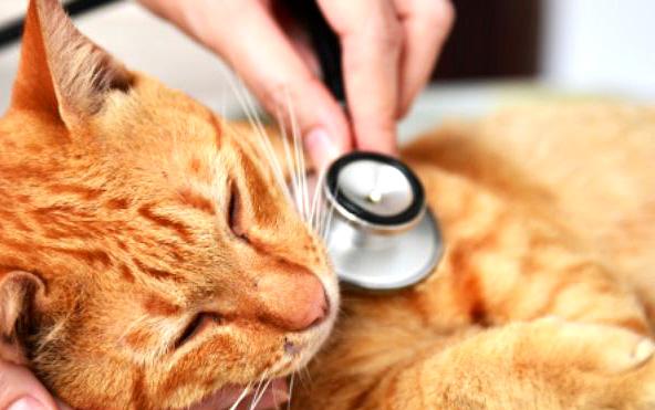 cat-vaccines